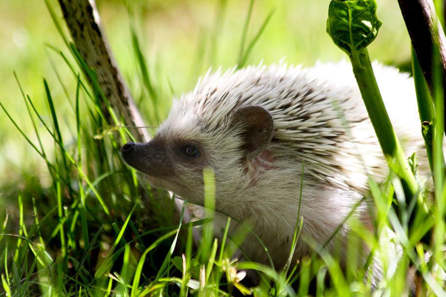 13 cutest animal in the world & those cool animal names